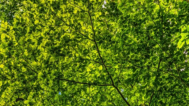 Trees provide a great canopy for creating a cool environment